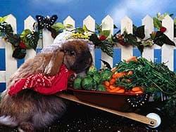 кролик на огороде, обои для рабочего стола, рабочий стол