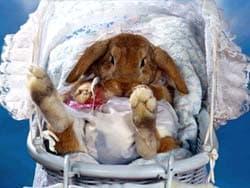 кролик в коляске, обои для рабочего стола, рабочий стол