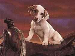 щенок в седле, обои для рабочего стола, рабочий стол