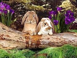 кролики, обои для рабочего стола, рабочий стол