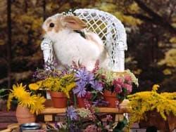 кролик в кресле, обои для рабочего стола, рабочий стол