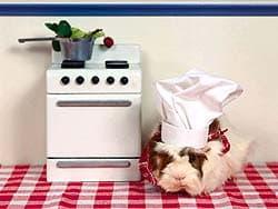 морская свинка-повар, обои для рабочего стола, рабочий стол