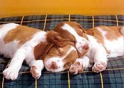спящие щенки, обои для рабочего стола, рабочий стол