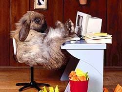 кролик за компьютером, обои для рабочего стола, рабочий стол