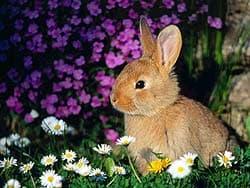 кролик в траве, обои для рабочего стола, рабочий стол
