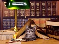 котенок в книге, обои для рабочего стола, рабочий стол