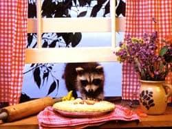 енот ворует пирог, обои для рабочего стола, рабочий стол