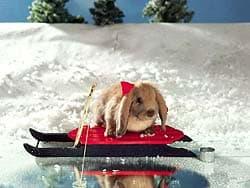 кролик на лыжах, обои для рабочего стола, рабочий стол