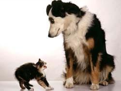 котенок испугался собаку, обои для рабочего стола, рабочий стол