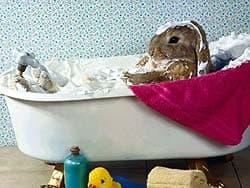 кролик купается в ванне, обои для рабочего стола, рабочий стол