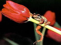 красная лягушка на цветке