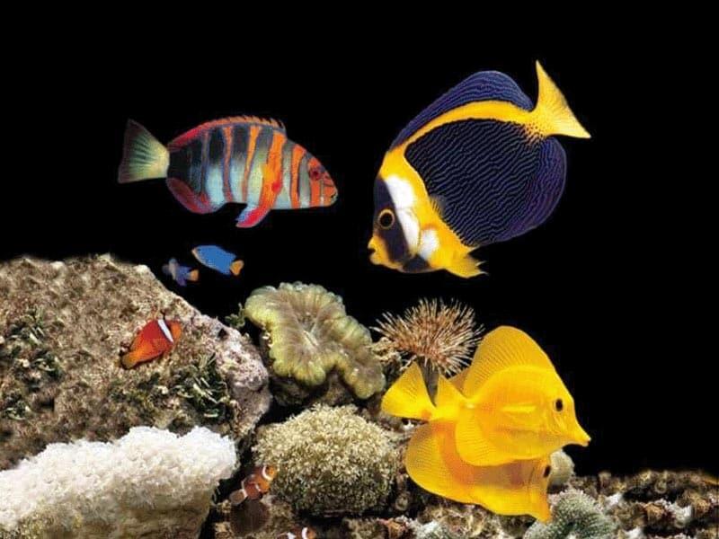 Морские рыбы фотообои фото обои