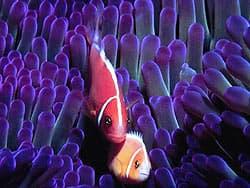 морские рыбка