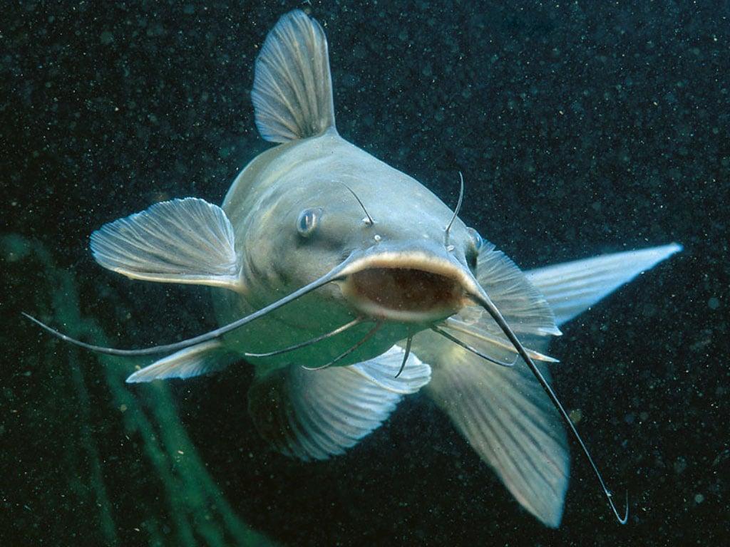 Рыба рыбка фотообои фото обои