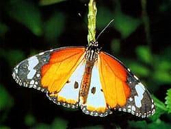 бабочка, фотообои