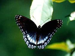 бабочка, фото