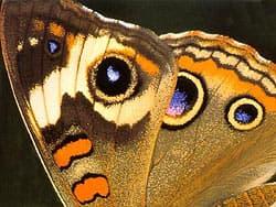 крыло бабочки, фото
