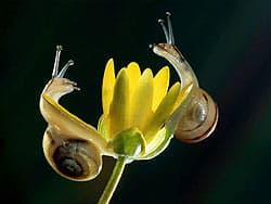 улитки на цветке