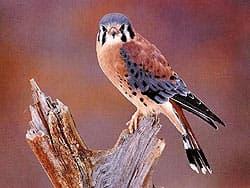 Фото птицы 10.