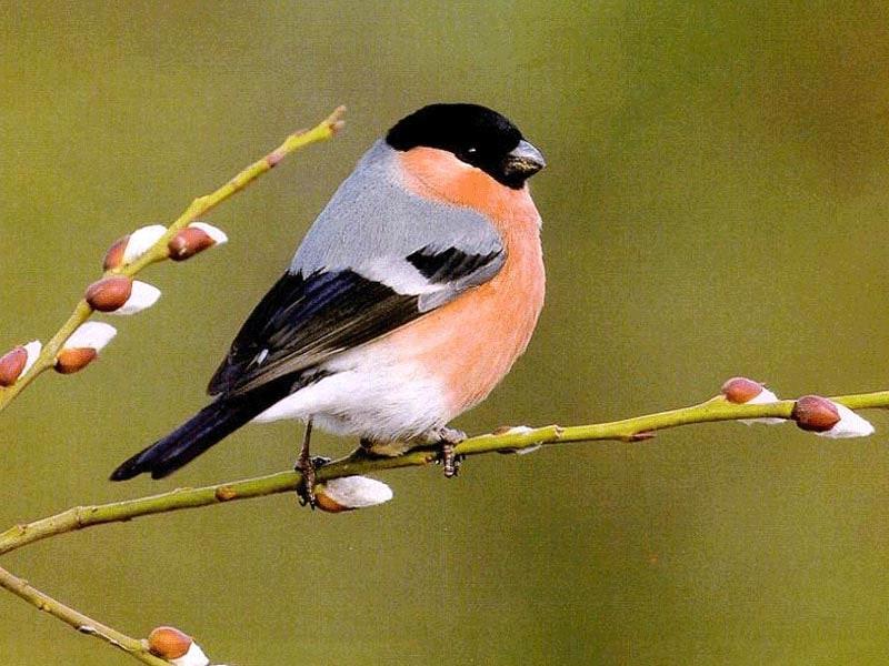 Последние лет 20 эти птицы крайне редко встречались в нашей области.