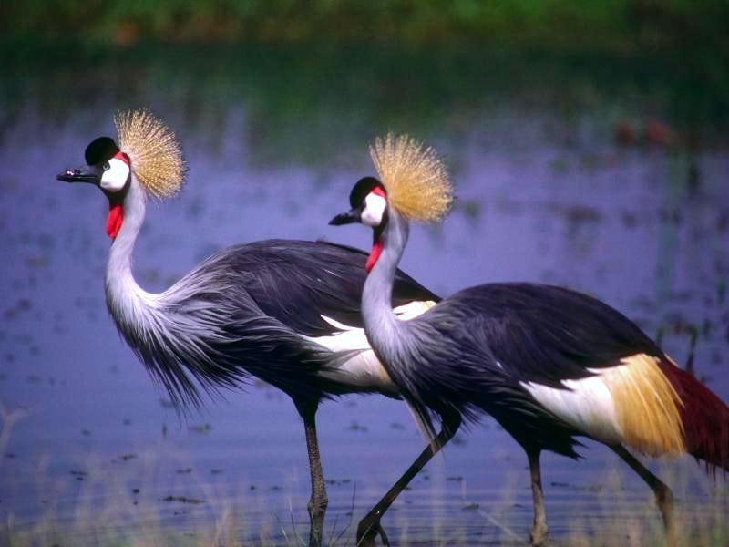 http://zooclub.ru/attach/fotogal/oboi/birds/43.jpg