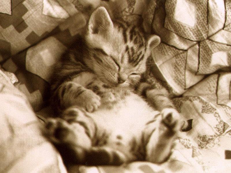 фотообои котята: