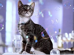 кошка и мыльные пузыри