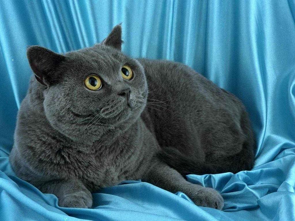 Кошка фотообои фото обои фотография
