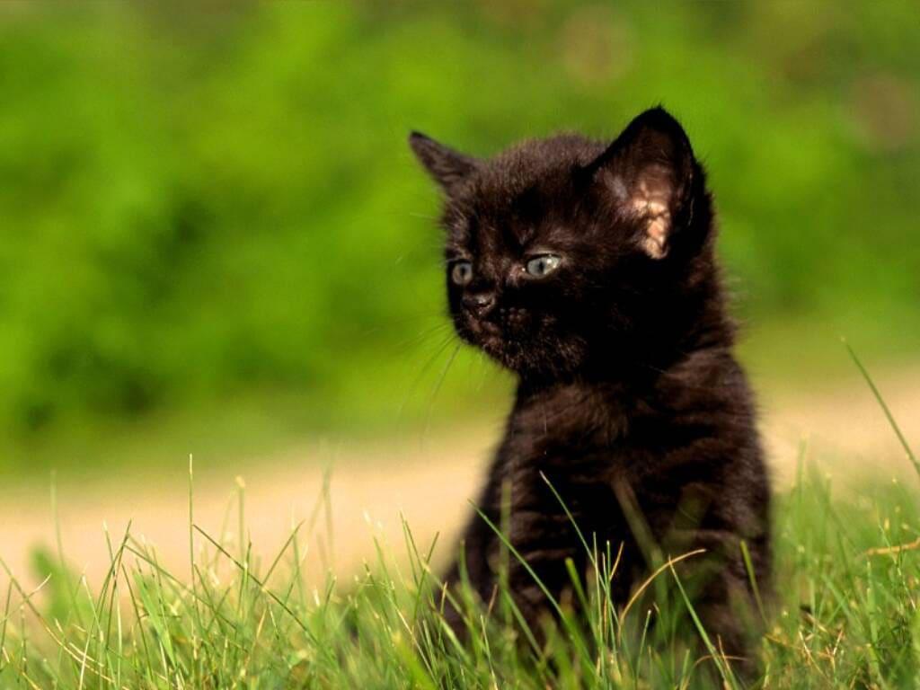 Коты фотообои 7