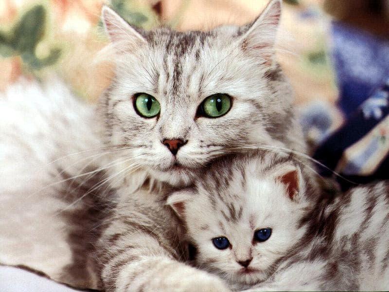 Котята и кошки прикольные фотки