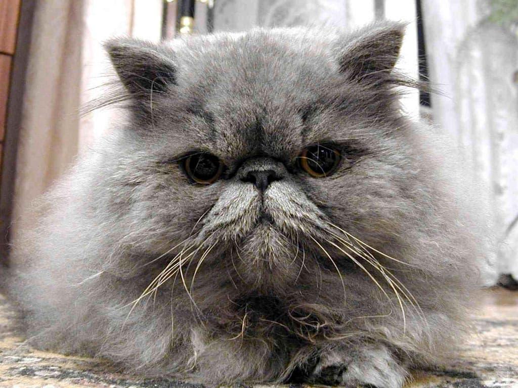 картинки кошек и котят: