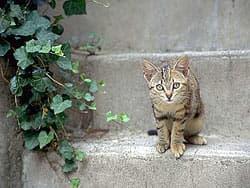 кошка на ступеньке