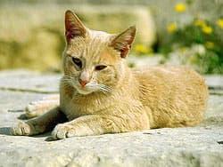 кошка греется на солнышке