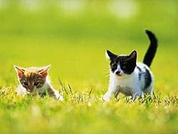 гуляющие котята