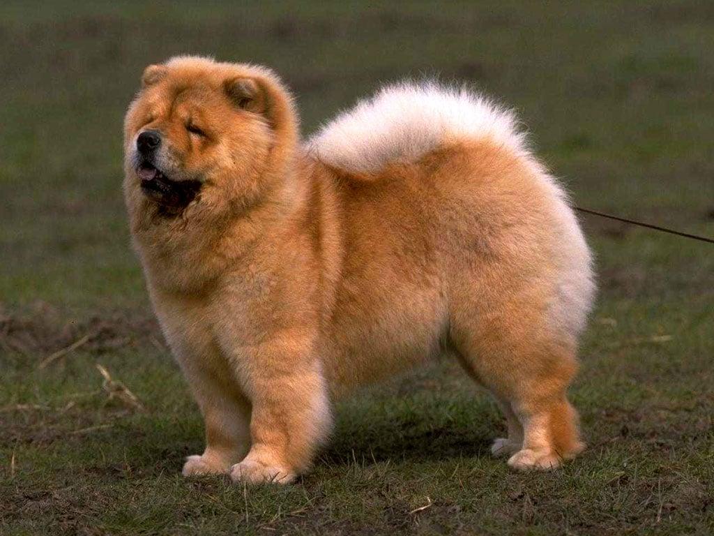Топ10 самых опасных пород собак в мире