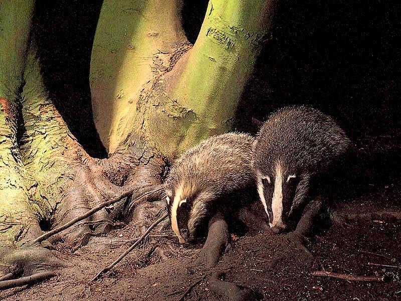Звуки животных леса mp3 скачать бесплатно