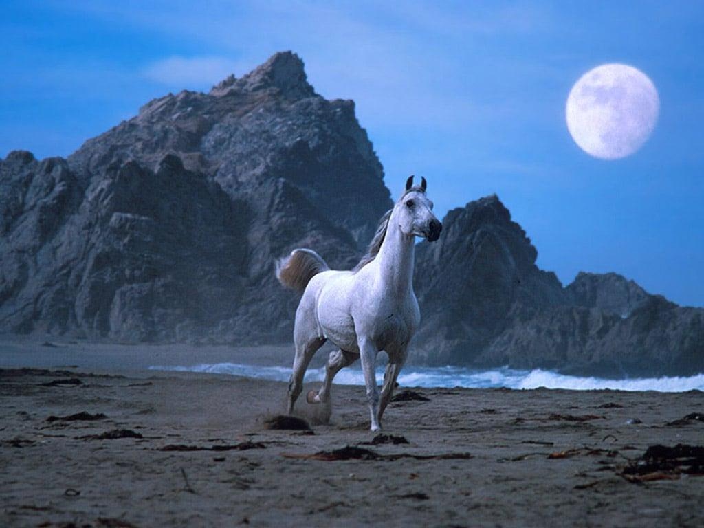 Обои лошади кони фото коней лошадей