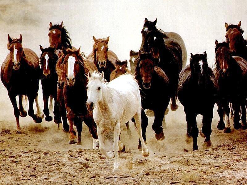 Стихи про лошадку  Сайт для мам малышей