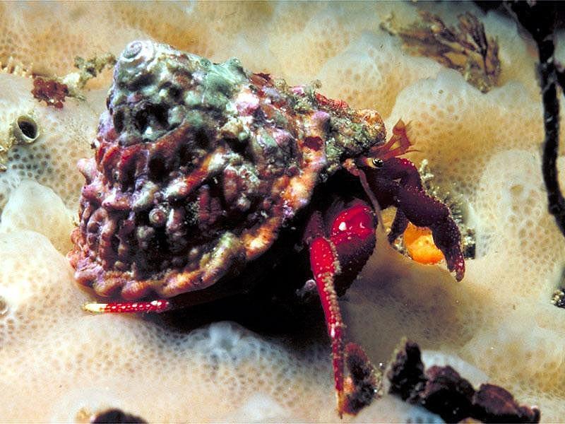 pozitsiya-kraba
