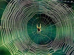 паук паутина