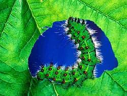 гусеница ест листик