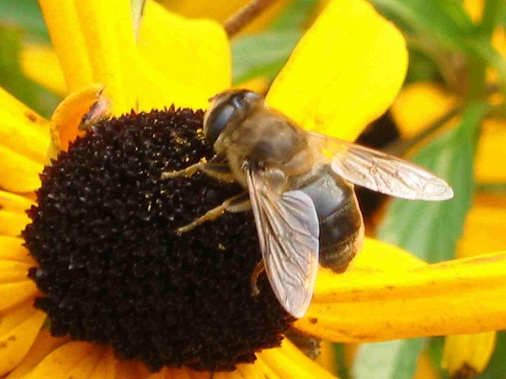 Скачать звук жужжание пчел