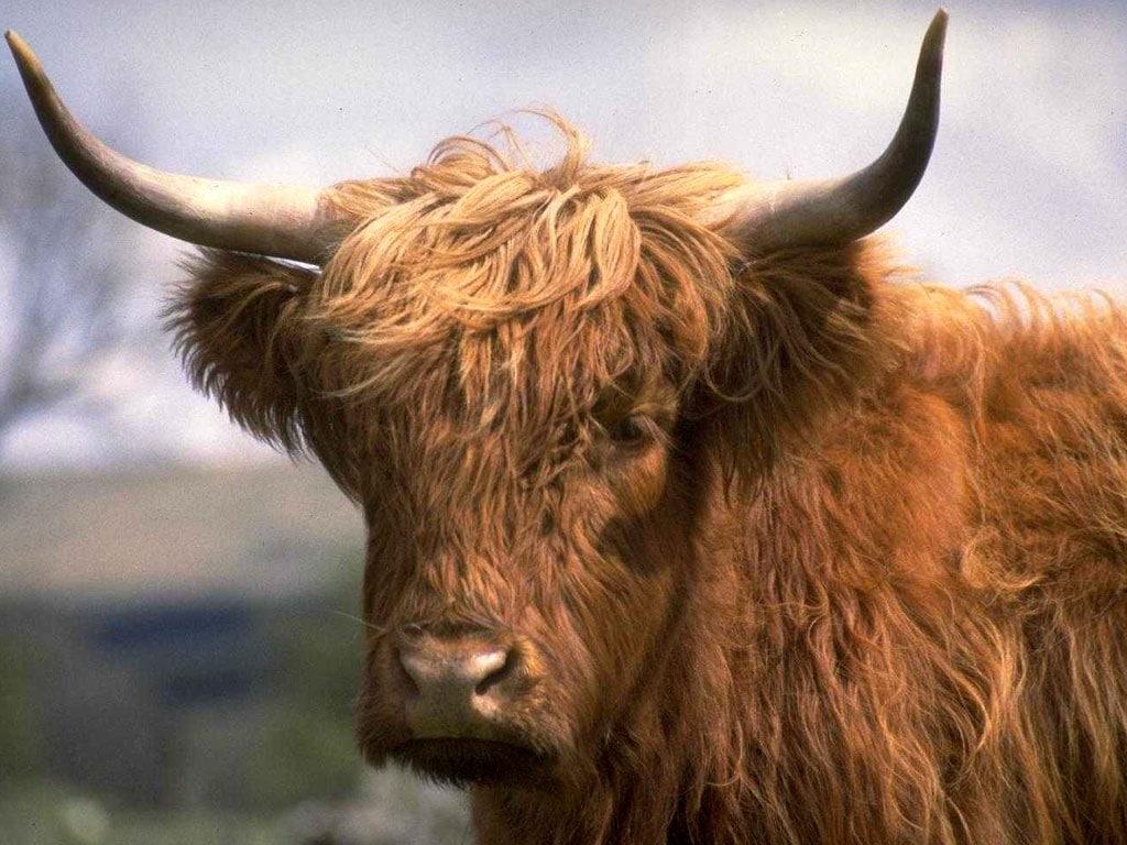 Смотреть порно австрийские пастушки онлайн 4 фотография