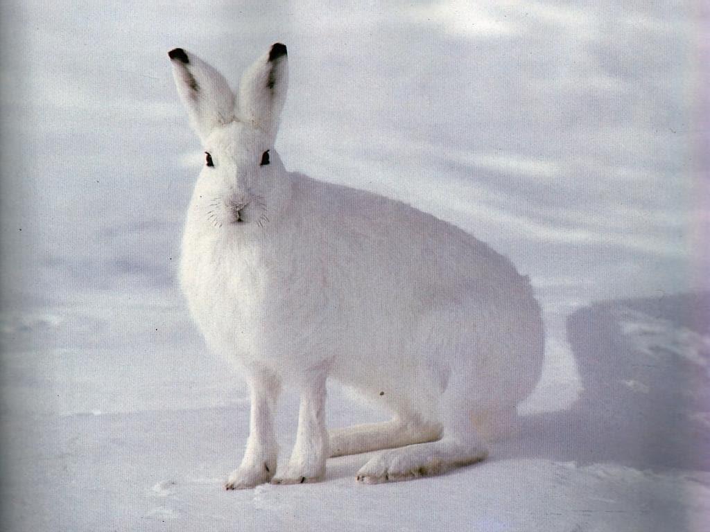 http://zooclub.ru/attach/fotogal/oboi/rodent/1.jpg