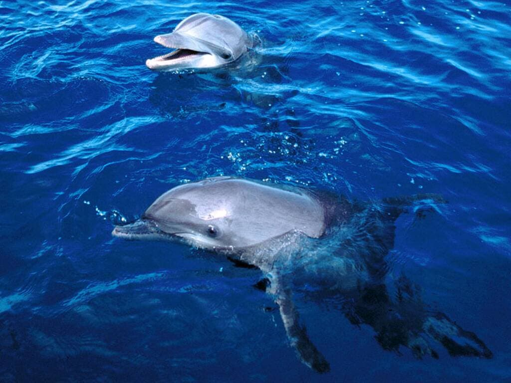 Дельфины фотообои фото обои