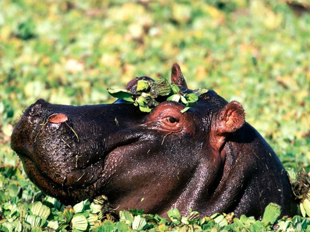 Показать скриншот African Wildlife Free Screensaver.