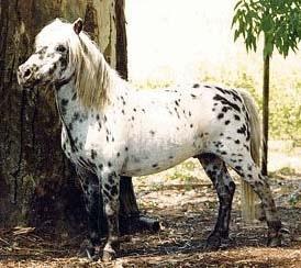Пони, фото фотография, лошади кони, породы лошадей