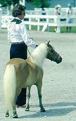 Американская миниатюрная лошадь, миниатюрная лошадь, фото фотография, лошади кони