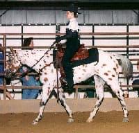 американский верховой пони, породы лошадей, фото фотография, лошади пони