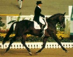 голландская теплокровная лошадь, порода голландской теплокровной лошади, фото фотография, лошади кони